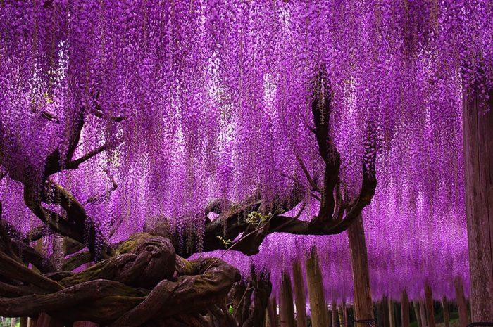 amazing-trees-1-2