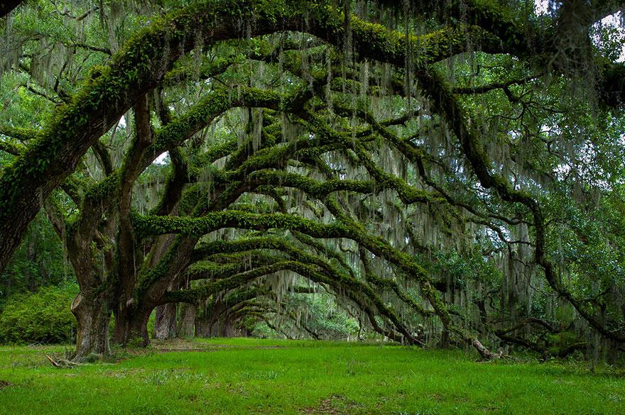 amazing-trees-17