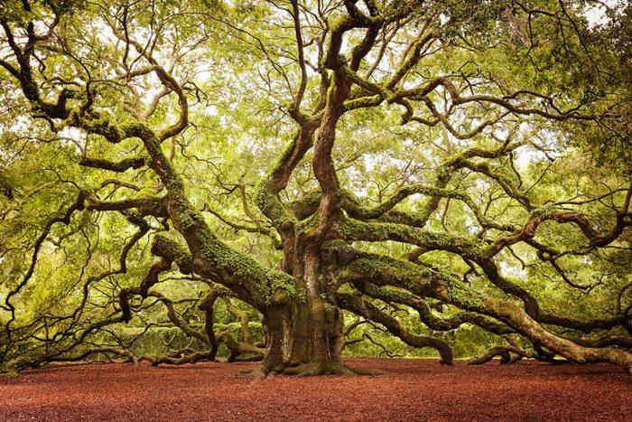 amazing-trees-22